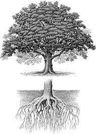 the 25 best oak tree ideas on tree roots
