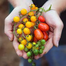 seed savers exchange heirloom seeds
