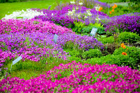 images of garden flowers home