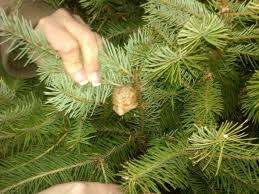 christmas tree spiders christmas tree