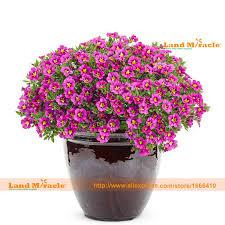 Fragrant Indoor House Plants - popular fragrant indoor flowers buy cheap fragrant indoor flowers