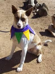 dog collar mardi gras chevron pin by amanda faggard on mardi dog collars and dog