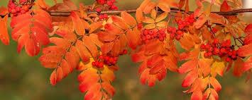 gratitude habitat why thanksgiving is important