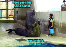 Walrus Meme - i can has cheezburger lolrus funny animals online cheezburger
