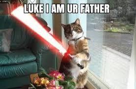 Star Wars Cat Meme - star wars memes from starwarsfun com album on imgur