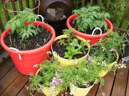 Garden Tips And Ideas Fall Tips For Container Gardening Simple Tips For Container
