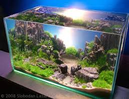 Aga Aquascape 2008 Aga Aquascaping Contest Now Online Why Dont We Have This For