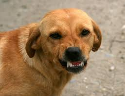 ask a dog trainer u2013 can i get my dog to stop barking at other dogs