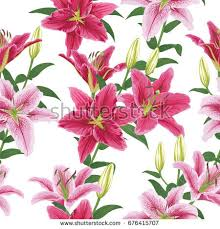 lilies flower flower stock images royalty free images vectors