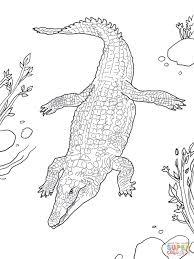 Coloriage  Crocodile du Nil  Coloriages à imprimer gratuits
