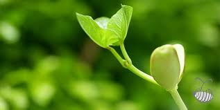 green plants plant living organism green plants produce food provide oxygen