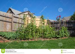 family vegetable garden nice organic family vegetable garden stock photo image 56584896
