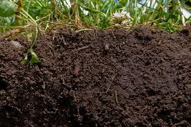 garden soil nature u0027s gold eden u0027s garden