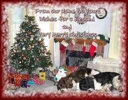 wishes merry christmas love dog