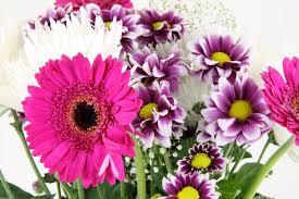 bouquet de fleurs roses blanches bouquet de fleur rose blanche violette images gratuites et