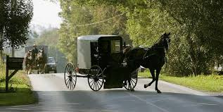 amish group faces charges after boozy buggy cop car crash ny