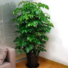 china small tree plants china small tree plants shopping guide at