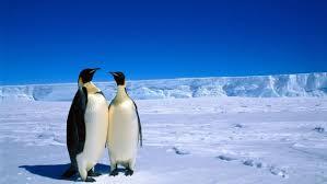 imagenes de la antartida animales de la antártida animaleshoy