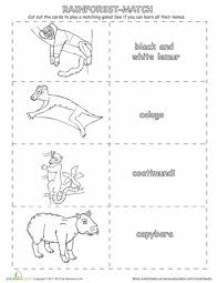 hd wallpapers forest habitat worksheets for kids