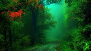 walk tag wallpapers page 6 path nature tree walk green trees let