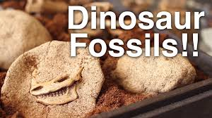 diy open dinosaur fossils youtube