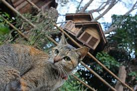Cat Treehouse Gallery Rabeang Pasak Chiangmai Treehouse Resort Small House Bliss