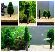 aquarium moss tree water plants shrimp fish tank