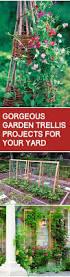 Diy Garden Trellis Ideas Garden Trellis Picmia