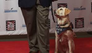 Who Leads The Blind Blind Man Reunited With Missing Labrador Guide Dog Thanks To
