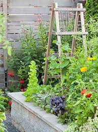 best 25 when to plant vegetables ideas on pinterest what to
