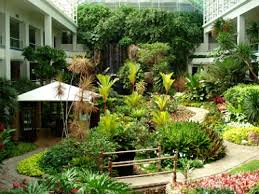 pictures of palm trees for landscaping tropical landscape design