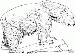 polar bear color page polar bear standing stone get coloring pages animal simple