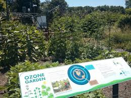 Botanic Garden St Louis by Slu Researchers Build Displays To Show How Ozone Affects Plants