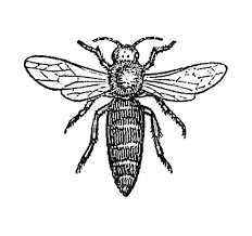 insect clipart vintage pencil and in color insect clipart vintage