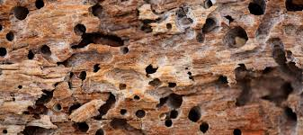 Wooden Ca by Pest Control In Carmichael Ca Official Pest Prevention