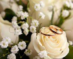 wedding rings flower images Gold wedding rings on flower stock photo colourbox jpg