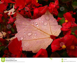 Autumn Flower Autumn Flower Bed Royalty Free Stock Image Image 1374906