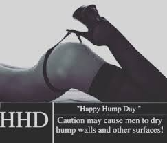 Sexy Hump Day Memes - image result for hump day meme sexy funny pinterest meme