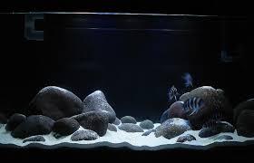 river rock aquarium cichlid forum u2022 type of rock for a