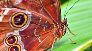 how to build a butterfly wing scientific american