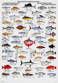 97 best fish chart images on fish chart fishing stuff