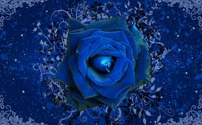 Blue Roses Blue Roses Wallpapers Hd Wallpapers Pulse