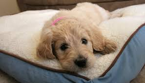 Sofa Bed For Dogs by 10 Simple Ways To Dog Proof Your Furniture Puppy Leaks