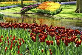 beautiful gardens in amsterdam things to do u0026 places to visit