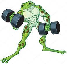 muscular cartoon frog curling dumbbells u2014 stock vector dolimac