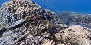 Google Live Maps Street View Treks Great Barrier Reef U2013 About U2013 Google Maps