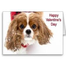 happy birthday with four spaniels greeting card happy birthday