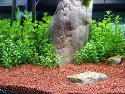 gorilla83 u0027s 40cm planted tank journal