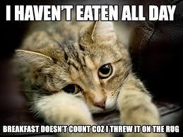 Cat Problems Meme - 10 cat problems that us hooman never knew 1