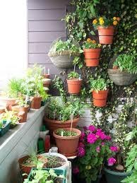 small potted plants completing small balcony garden which is